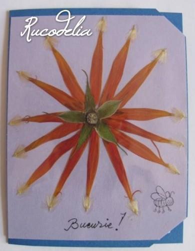 Felicitare Rucodelia 4