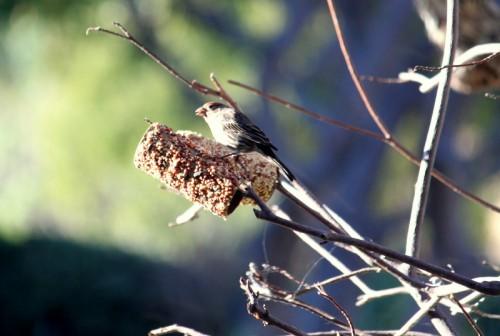 birdseed feeder 008