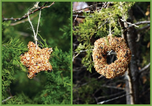 food-for-feathered-friends-biscuit-bird-feeder1